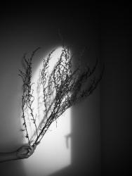 39_hanslucas-lpastureau-herbiers0009.jpg